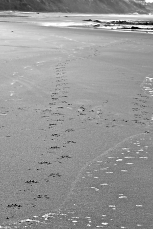 Lilypaws in the sand
