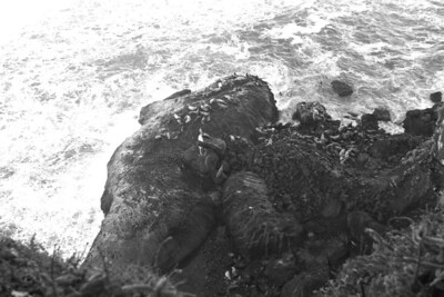 Christmas Eve 2013, Drive down the coast through Cape Perpetua to Florence Oregon