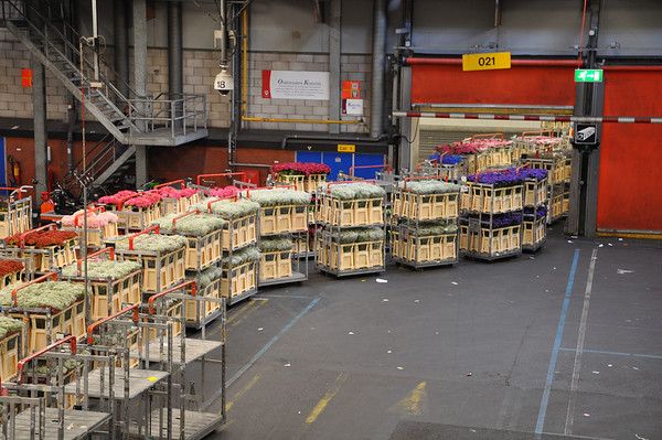 Incoming flowers are put in special containers and placed on carts.