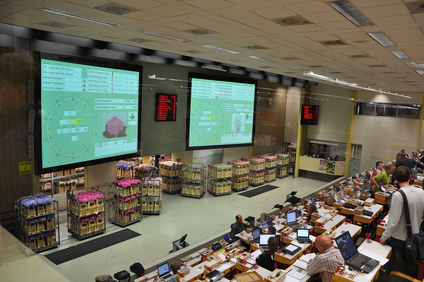 Another view of the auction room.  After the sale, the flowers are moved to the buyers outgoing queue for shipping.