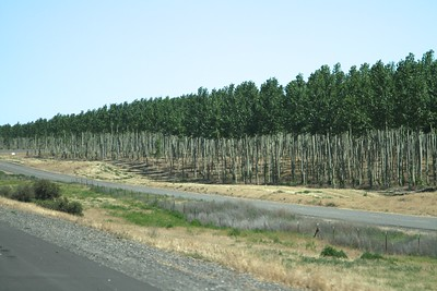 DAY ONE  Paper tree farm on the Columbia river gorge Oregon  On our drive from Portland Oregon to our hotel in  Clarkston Idaho