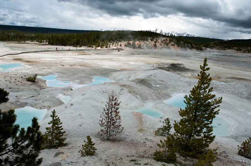 Norris Geyser Basin.  Yellowstone National Park.