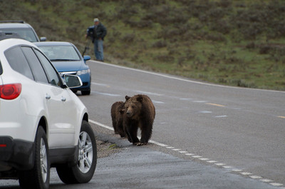 Yep.  A bear and her 2 cubs.  Can't tell if it was a grizzly or a black bear.  When they are that big and this close....it doesn't really matter does it?