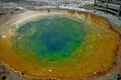 Morning Glory Pool in the Old Faithful area of Yellowstone National Park.  The different colors are caused by different strains of algae that thrive at different temperatures (all of them HOT). Liz shot this picture while sitting on my shoulders.