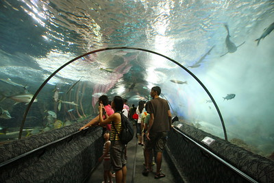 UNderwater tunnel at the Singapore Aquarium on Sentosa Island