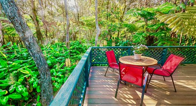 A rainforest backyard which is being overrun by the invasive kahili ginger plant (on the left).
