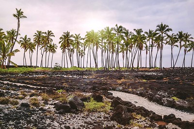 The barren lava fields of Pu'uhonua, or the City of Refuge, where Hawaiians could go to seek absolution for breaking ancient laws. Pu'uhonua o Honaunau National Historical Park at Honaunau on the Big Island of Hawaii.