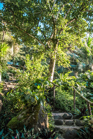 Treehouse Vacations North Shore Hawaii