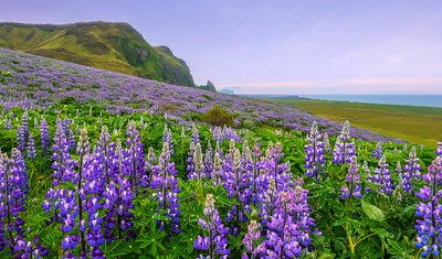 Hill of flowers