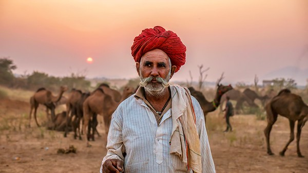 A Rajasthani camel trader in front of his herd at the annual Pushkar Camel Fair.
