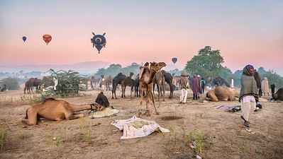 Hot air balloons floating over the Pushkar Camel Fair