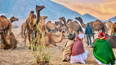 Camel traders observing a herd of camels in a desert camp at the Pushkar Camel Fair.