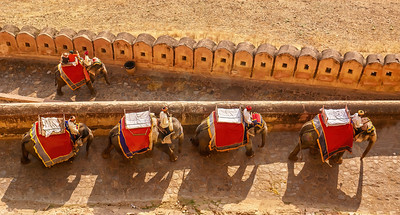 A line of working female elephants who carry tourists up a hill to the Amber Fort near Jaipur. Elephant riding is now an ethical issue in the tourist industry.