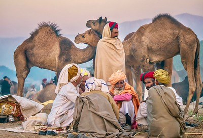 A group of Rajasthani camel traders  in their temporary desert camp at dawn, during the Pushkar Camel Fair.