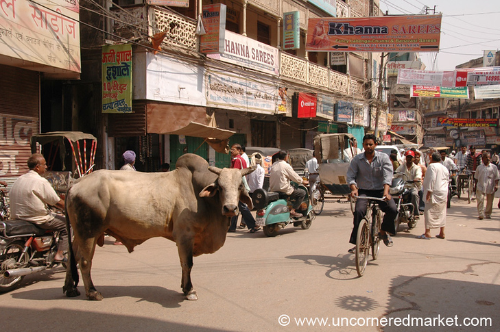Typical Street Scene, Cow and All: Varanasi, India