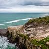 Gannet colony at Maukatia Bay, NZ