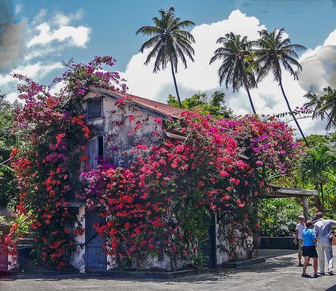 Bougainvillea covered building