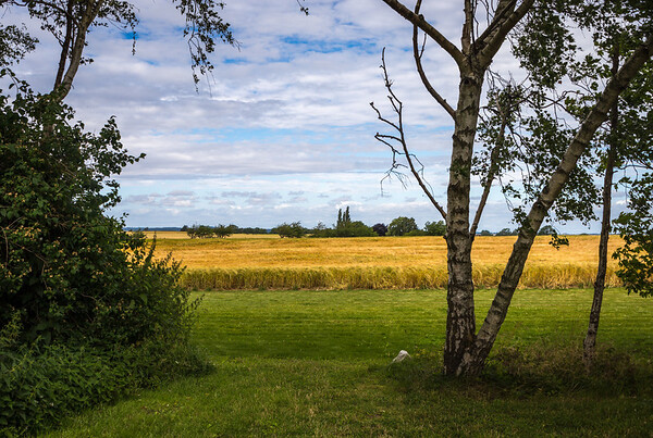 Farmland, Møn, DK