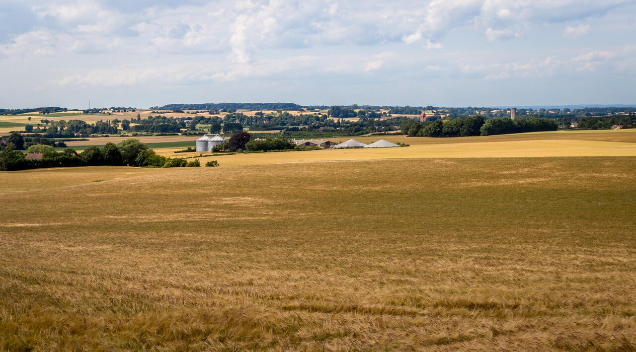 Farm fields on Møn