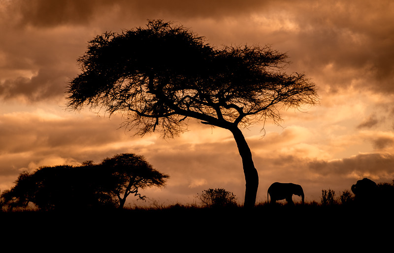 Dawn of the Elephant