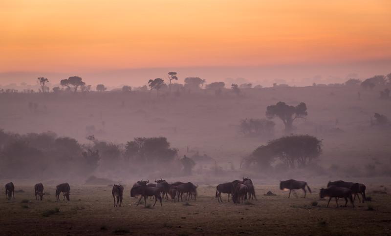 Foggy Dawn on the Seregeti