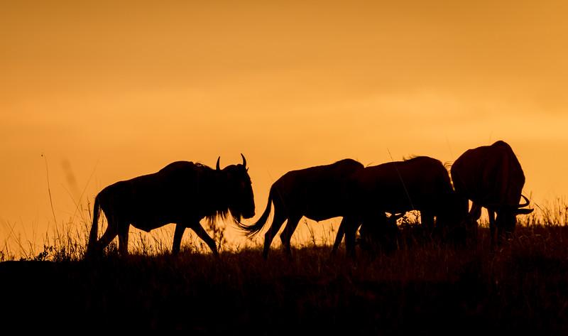 Wildebeest Silhouettes