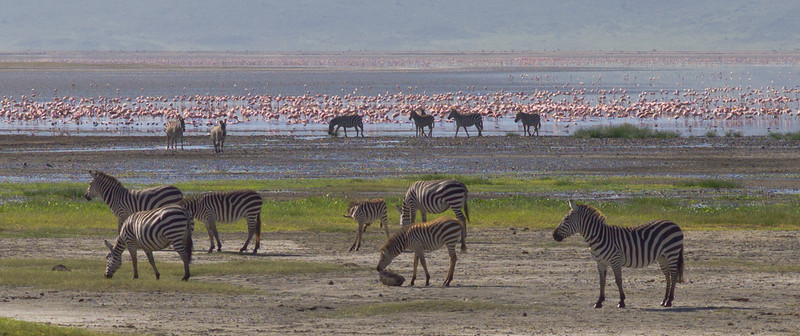 At the center of Ngorongoro is Lake Magadi, the largest source of fresh water in the Crater, and home to countless flamingos.
