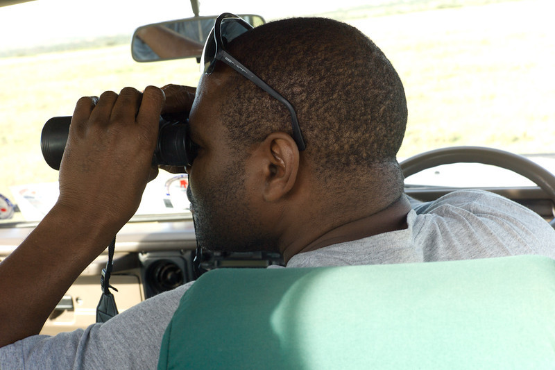 Shadrach is our guide and driver for the Safari. <br /> <br /> In this photo, Shadrach searches the grasslands for cheetahs. He found them.