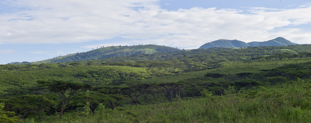 © Robert Will 2013<br /> <br /> Leaving the plains, we climb through forests of Acacia to the rim of Ngorongoro.