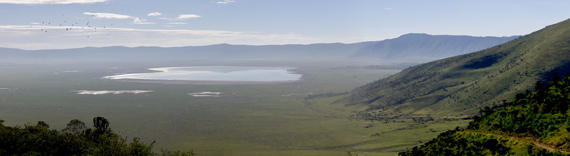 Local legend has it that the Garden of Eden was located in the Ngorongoro Crater. To be sure, Olduvai Gorge - where the oldest fossilized remains of man were discovered - is just a few kilometers away. <br /> <br /> Ngorongoro Crater boasts the highest density of large animals in Africa. Its bowl shape makes it a natural gathering place - except for giraffes - who cannot descend the steep sides of the Crater.<br /> <br /> Many of Ngorongoro's animals do not migrate. Once they arrive, they never leave.