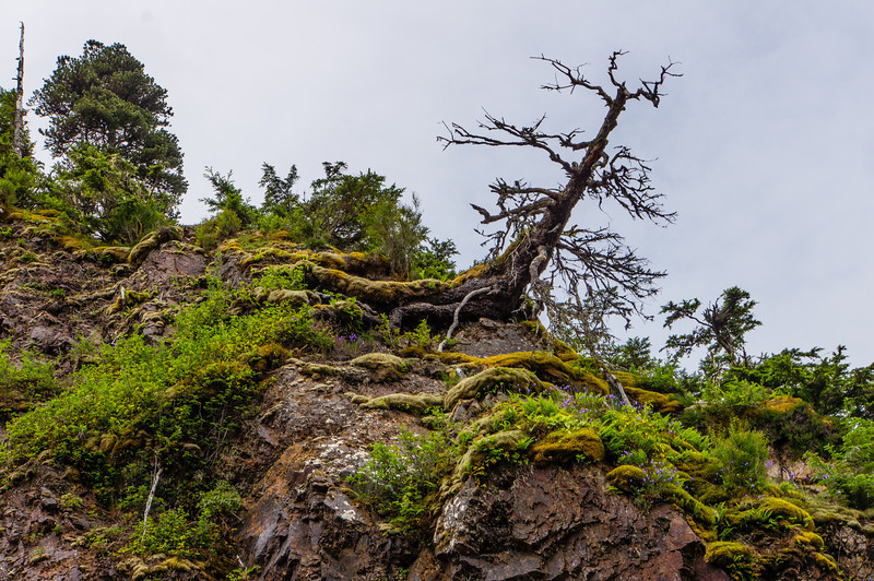 Old Tree with Moss and Ferns