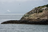 Birds on South Marble island