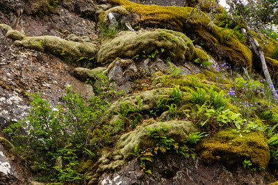 Close up of Moss and Ferns