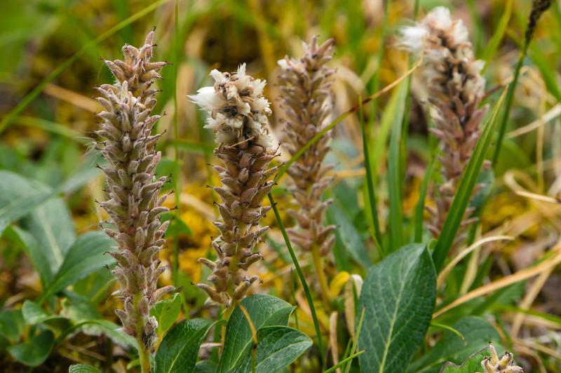 Unidentified Plants