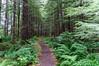 Trail at Cascade Creek
