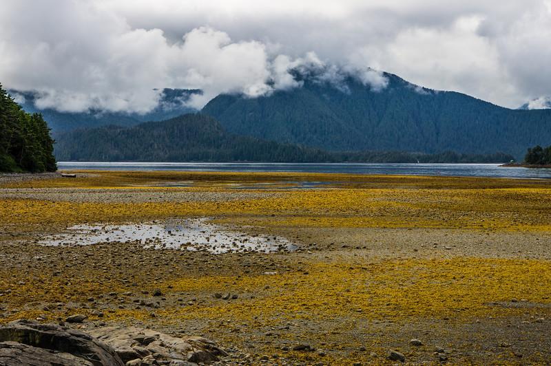 Shore of Crescent Bay