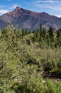 Denali Park View