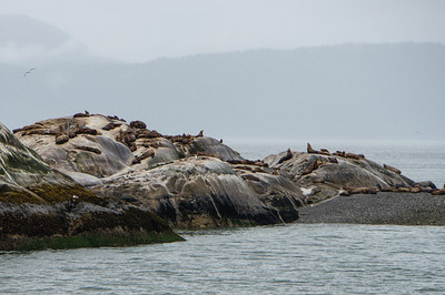 Sea Lions on South Marble Island