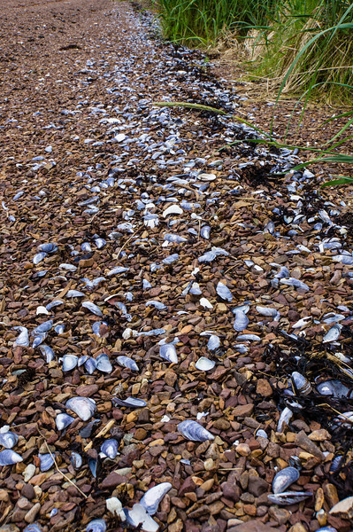 Trail of Mussel Shells