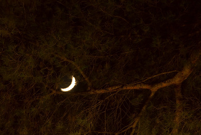 Moon seen through tree branches. (Dec 13, 2007, 06:42pm)