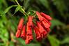 Cloud Forest Flower<br /> An unidentified flower seen in the Monteverde Cloud Forest Preserve.