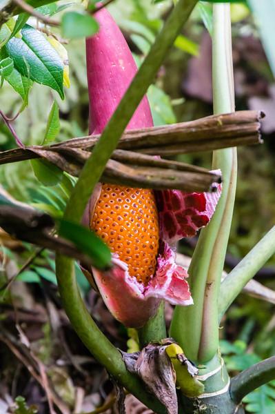 Flower<br /> An unidentifier flower or fruit seen along the Sky Walk in the Monteverde Cloud Forest.