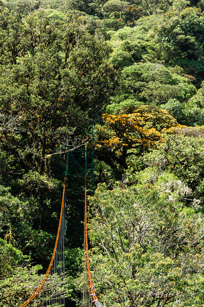 Suspension Bridge on Sky Walk<br /> One of the suspension bridges along the Sky Walk in the Monteverde Cloud Forest.