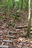 Path on Barro Colorado Island<br /> Here are some stairs along the path through the rain forest on Barro Colorado Island, on Lake Gatun in the Panama Canal.