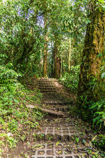 Cloud Forest Stairs<br /> This is part of the path through the Monteverde Cloud Forest Preserve.  The sloping sections of the path were covered with these concrete blocks that served as stairs.
