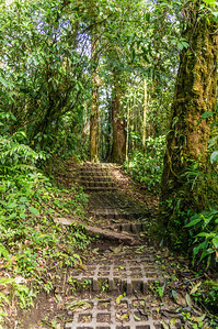 Cloud Forest Stairs This is part of the path through the Monteverde Cloud Forest Preserve.  The sloping sections of the path were covered with these concrete blocks that served as stairs.