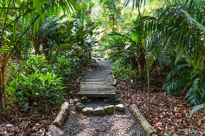 Botanical Garden Trail A section of the trail through the Casa Orquideas Botanical Gardens in Costa Rica.
