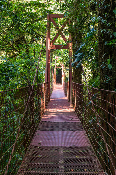Cloud Forest Bridge<br /> This is the one and only suspension bridge in the Monteverde Cloud Forest Preserve.