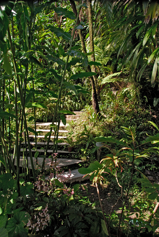 <b>Path to Trafalgar Falls</b>   (Mar 19, 2006, 03:21pm)  <p align=left>Trafalgar Falls is easily reached from the road by following a short, well maintained path.  Here is an early section of that path.</p>