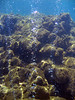 <b>Champagne Reef bubbles</b>   (Mar 20, 2006, 11:04am)  <p align=left>Another picture of the bubbles rising from the sea floor at Champagne Reef.</p>